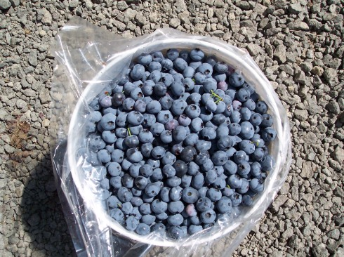 blueberry bucket